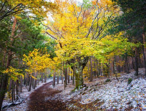 Parque Natural Hayedo De La Tejera Negra